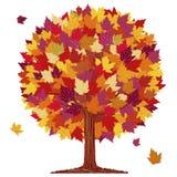 Árbol de la bola de la hoja del otoño Fotografía de archivo