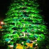 Árbol de la botella de la Navidad Imagenes de archivo