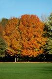 Árbol de la caída Fotos de archivo