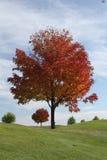 Árbol de la caída Imágenes de archivo libres de regalías