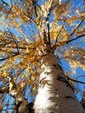 Árbol de la caída Fotografía de archivo