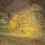 Árbol de la caída Foto de archivo libre de regalías