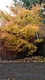 Árbol de la caída Imagen de archivo libre de regalías