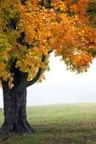 Árbol de la caída en niebla Fotografía de archivo
