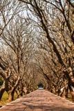 Árbol de la calvicie con el sendero Fotos de archivo