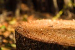 Árbol de la choza fotos de archivo