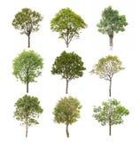 Árbol de la colección aislado en blanco Fotos de archivo