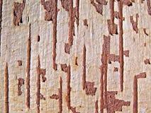 Árbol de la corteza Imágenes de archivo libres de regalías
