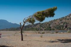 Árbol de la curva Imagen de archivo