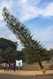 Árbol de la curva en estado indio Imagen de archivo