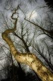 Árbol de la fantasía del bosque Foto de archivo