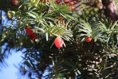 Árbol de la flor Imagenes de archivo