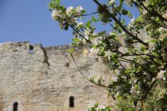 Árbol de la floración de Apple fotos de archivo libres de regalías