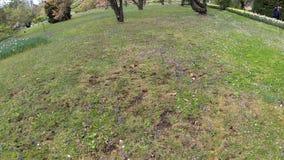 Árbol de la Florida Rubra del Cornus 4K en tiempo real almacen de video