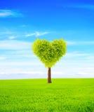 Árbol de la forma del corazón imágenes de archivo libres de regalías