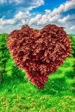 Árbol de la forma del corazón imagen de archivo libre de regalías