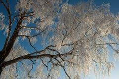Árbol de la helada Imagen de archivo
