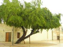 Árbol de la herencia Fotos de archivo