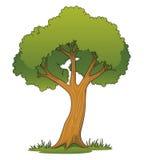 Árbol de la historieta Imagen de archivo libre de regalías