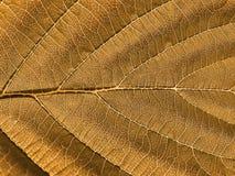 Árbol de la hoja fotografía de archivo