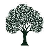 Árbol de la hoja Imagenes de archivo