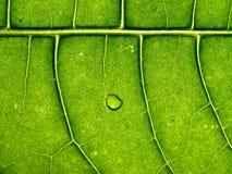 Árbol de la hoja imagen de archivo