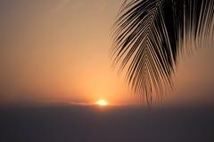 Árbol de la hoja del coco con el fondo de la puesta del sol Fotos de archivo