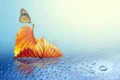 Árbol de la hoja del otoño con la mariposa imagen de archivo