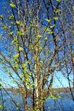 Árbol de la hoja del resorte imagen de archivo libre de regalías