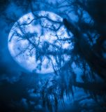 Árbol de la Luna Llena de Warewolf Fotografía de archivo libre de regalías