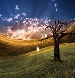 Árbol de la luz Foto de archivo libre de regalías
