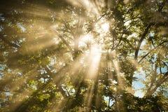 Árbol de la luz del sol fotos de archivo libres de regalías