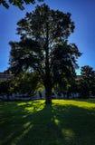 Árbol de la mañana Fotografía de archivo libre de regalías