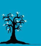 Árbol de la magnolia Imágenes de archivo libres de regalías