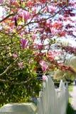 Árbol de la magnolia Fotografía de archivo