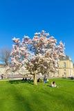 Árbol de la magnolia en Suttgart Imagenes de archivo