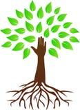 Árbol de la mano con las raíces Imágenes de archivo libres de regalías