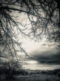 Árbol de la montaña fotos de archivo libres de regalías