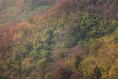 Árbol de la montaña Foto de archivo libre de regalías