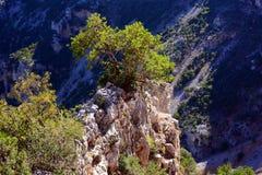 Árbol de la montaña sola fotos de archivo