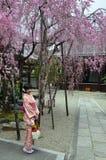 Árbol de la muchacha y de Sakura del kimono Foto de archivo