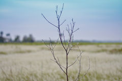 Árbol de la muerte Fotografía de archivo