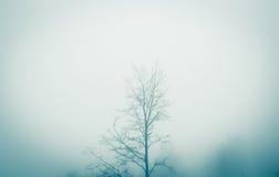 Árbol de la niebla Foto de archivo libre de regalías