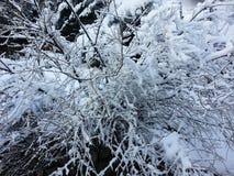 Árbol de la nieve Imagenes de archivo