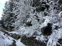 Árbol 3 de la nieve Fotografía de archivo