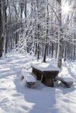 Árbol de la nieve Imágenes de archivo libres de regalías