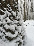 Árbol de la nieve Imagen de archivo