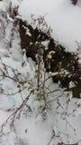 Árbol de la nieve Fotografía de archivo
