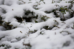 Árbol de la nieve de París en el invierno Imagen de archivo