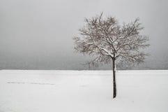 Árbol de la nieve del invierno Fotografía de archivo